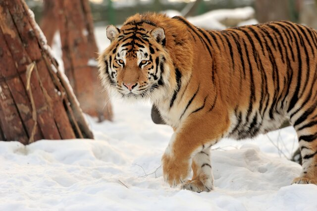 Zoo park Stropkov