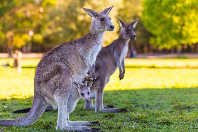 Zoofarma Nový Zéland