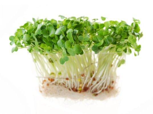 20 g Semená na klíčenie (reďkovka)