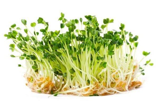 10 g Semená na klíčenie (rukola)
