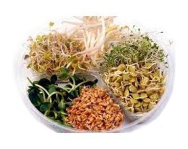 20 g Semená na klíčenie (jemná zmes)
