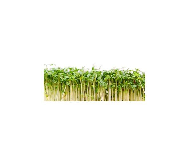 30 g Semená na klíčenie (žerucha)