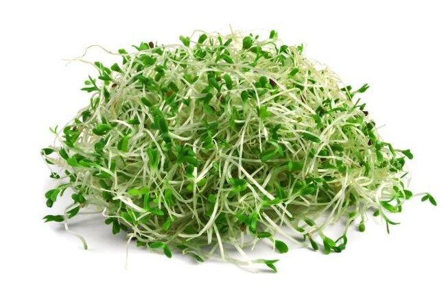 20 g Semená na klíčenie (lucerna siata)