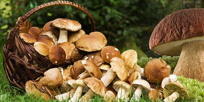 Vypestujte si lesné huba vo vašej záhrade