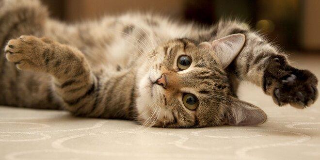 24-hodinový Hotel pre mačky v Bratislave Spokojná mačka