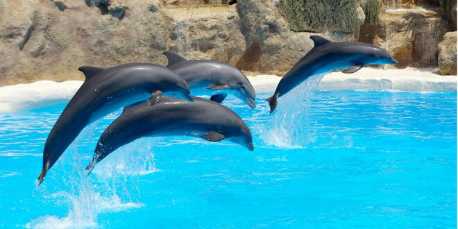 Show delfínov a exotické zvieratá v Norimbergu