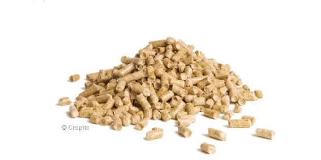 Jarný detox: Ostropestrec Darka Gold či Organic
