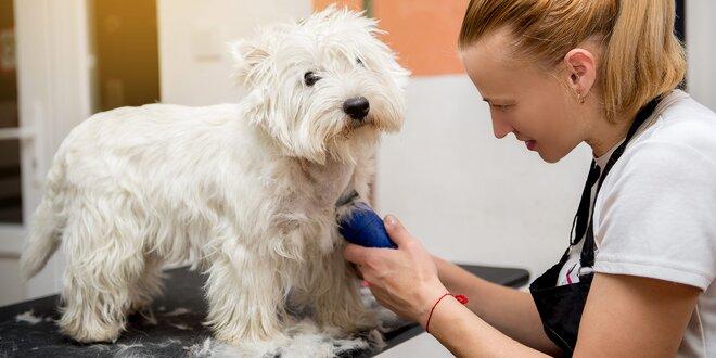 Profesionálne strihanie psov