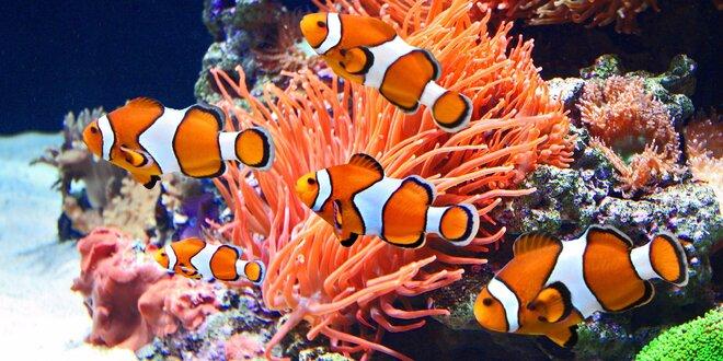 Pozdravte nádherné rybky z morského sveta