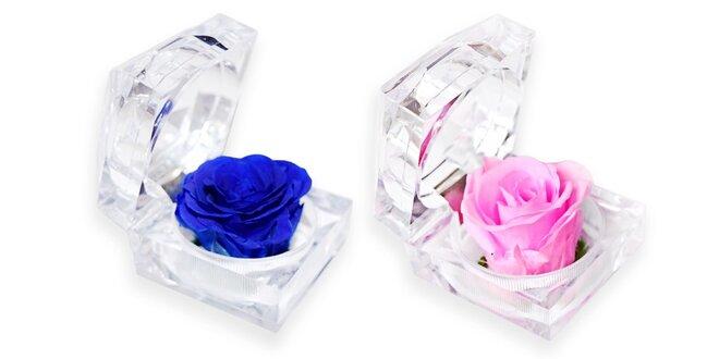 S láskou naveky: nesmrteľná ruža v priesvitnej darčekovej krabičke