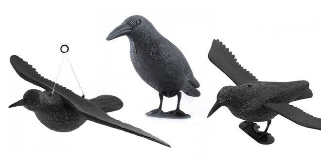Veľké vtáky hladenie