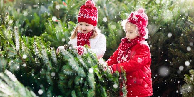 Vianočné stromčeky v kvetináči