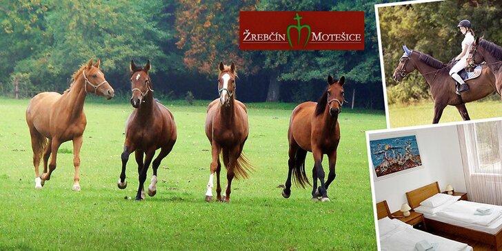 Pobyt v penzióne Motešice pre milovníkov koní, dieťa do 12 rokov zadarmo!