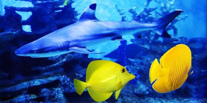 Vstupenky do Morského sveta pre celú rodinu