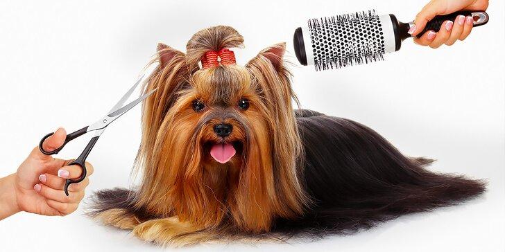 Kompletná starostlivosť o vášho psíka v psom salóne Labku na to