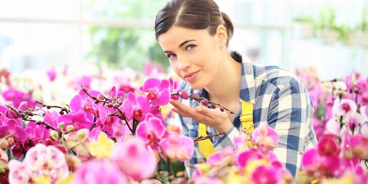 Poznávací zájazd do mestečka Klosterneuburg a výstava orchideí