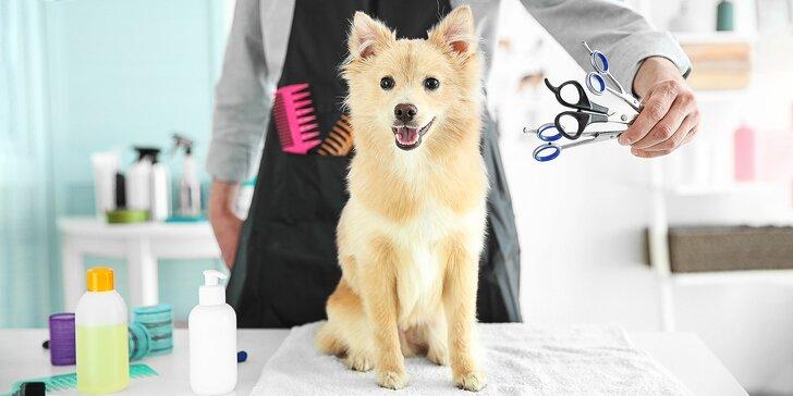 Strihanie srsti a dentálna hygiena pre psíkov