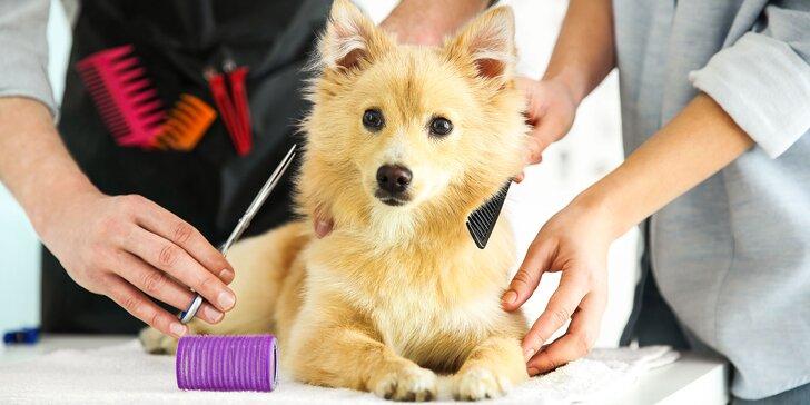 Profesionálne strihanie psíkov aj s kúpaním v Salóne Kamoš