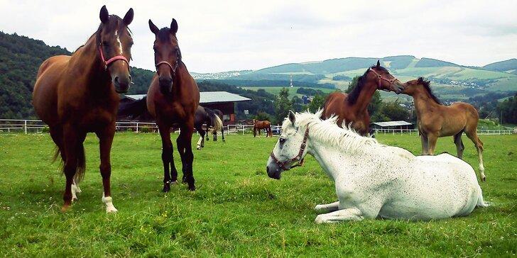 Jazdy na koni či jazdecký kurz s vychádzkou do prírody