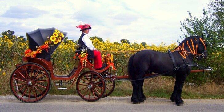 Jazda konským záprahom po Pezinku či okolo Panholca