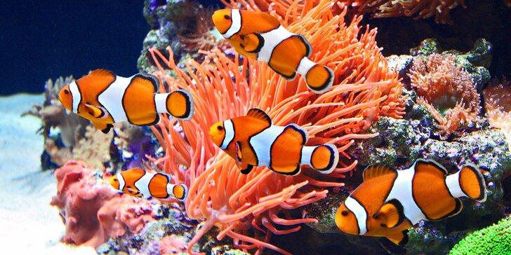 Hurá za rybkami z Morského sveta: vstupenky pre jednotlivcov i rodiny