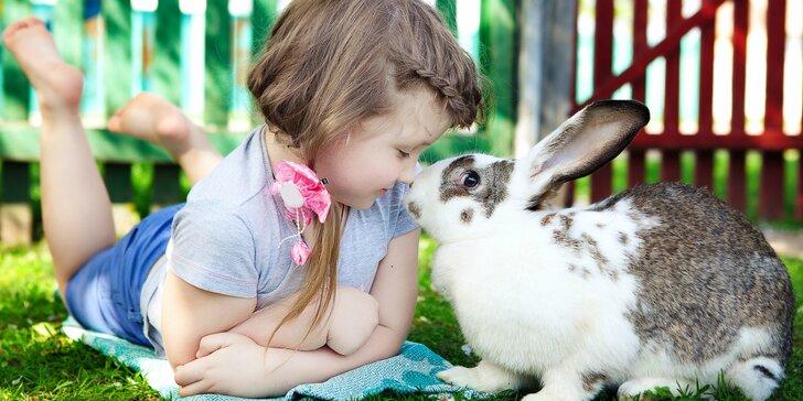 Detský tábor Letka - stretnutie detí, ktoré majú radi zvieratká a prírodu s bohatým programom a zapožičaním zajačika na celý týždeň!