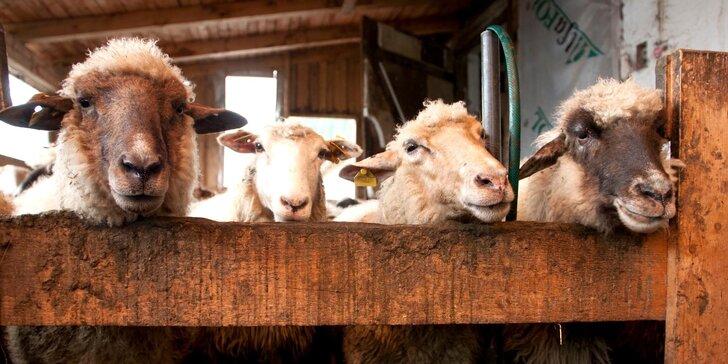 Pobyt v Malej Fatre priamo na ekologickej farme Gazdovský Dvor v Chalupe Pierko