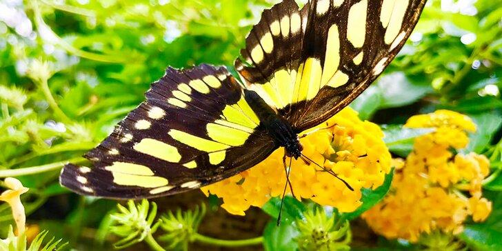 Celodenná vstupenka do motýlej záhrady a ZOOKONTAKT