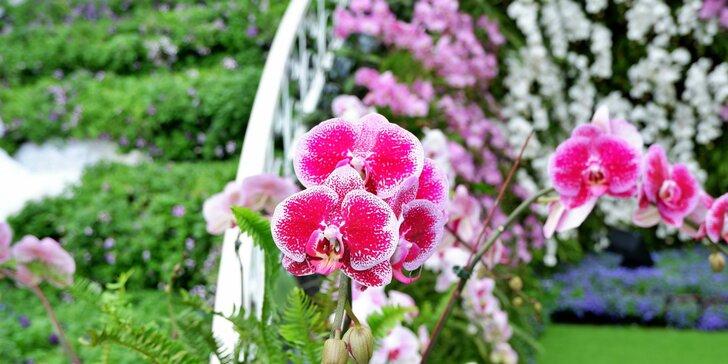 Jednodňový zájazd do Viedne - výstava kvetov a návšteva Primarku