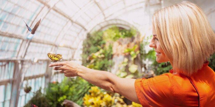 Exotická Viedeň - Dom mora, secesný skleník s voľne poletujúcimi motýľmi a návšteva historického centra