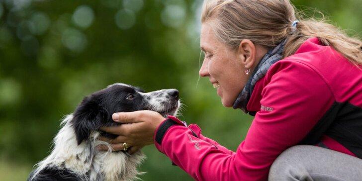 Absolvujte základný výcvik a zistite, ako pochopiť svojho psa!