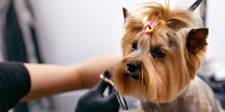 Dentálna hygiena a strihanie srsti pre psíky v Dog's Barber&SPA
