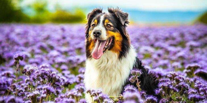 Profesionálne fotografovanie vás a vašich psích miláčikov