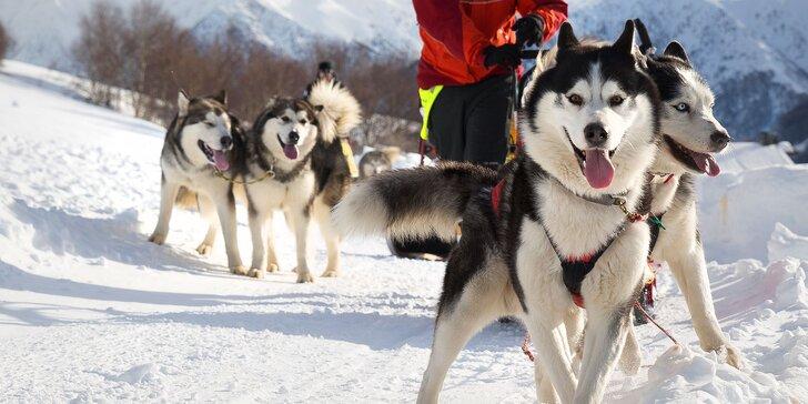 Jazda na psom záprahu - sibírske husky a krásne zasnežené Donovaly
