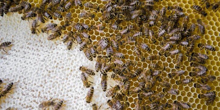 Prehliadka včelej farmy s pobytom v apidomčeku a ochutnávkou včelích produktov