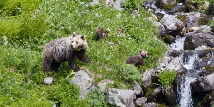 Zážitkové pozorovanie medveďov v Západných Tatrách so sprievodcom a s možnosťou jazdy na elektrobicykli