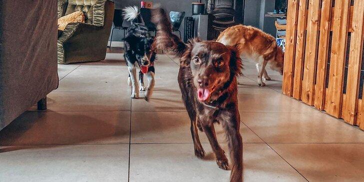 Škôlka pre psy na celý deň alebo občerstvenie pre vás a vášho havkáča