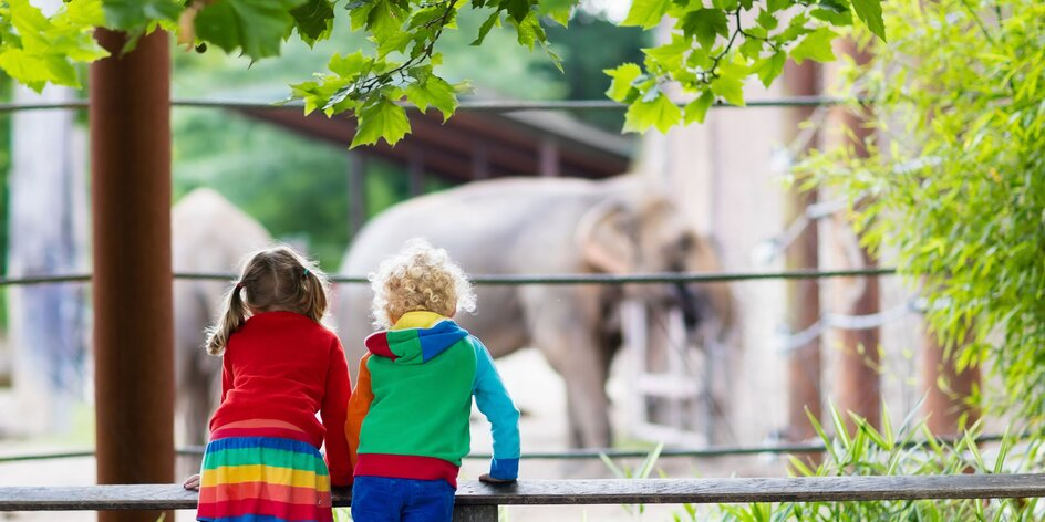 TIP na výlet od mamičky blogerky | ZOO Schönbrunn