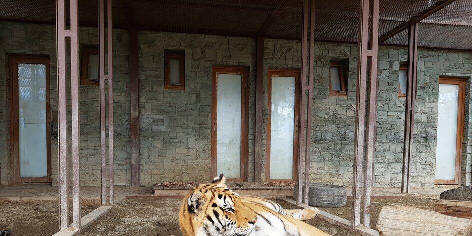 """Tiger """"tatranský""""- Wild park Veľká Lomnica"""