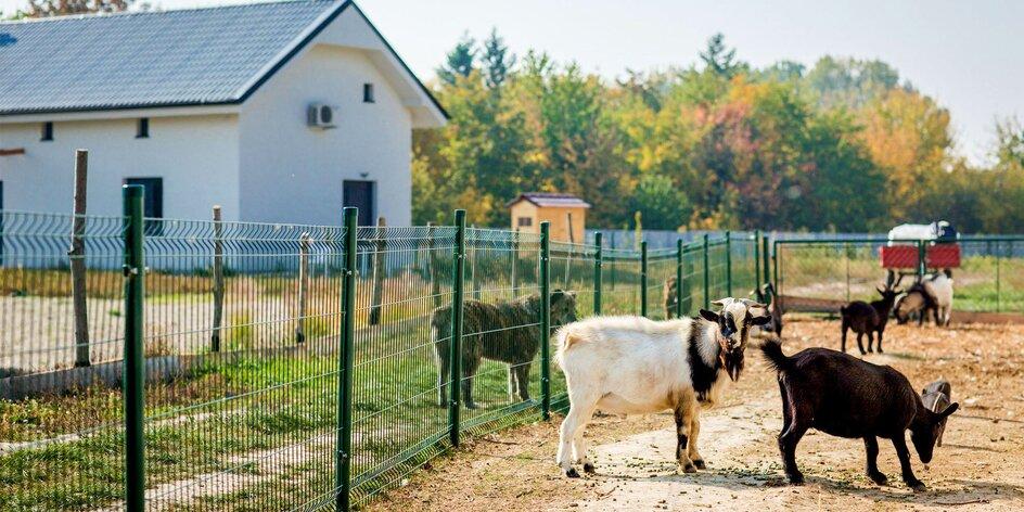 Netradičný pobyt neďaleko Bratislavy: Včelí Majer s mini zoo a možnosťou…