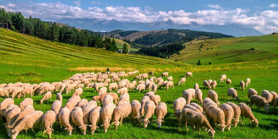 13 tipov na výlety na Liptove s deťmi. Navštívte Mini Slovensko či Medvediu štôlňu