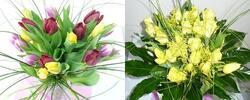 15,99 Eur za nádhernú kyticu tulipánov vo farbe podľa vášho výberu. Zľava 42%!