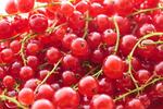 Ovocné stromy spestria vaše domy