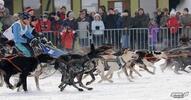 Psie záprahy, sane, štvorkolky - užite si adrenalínovú zimu!