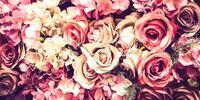 Baden - Festival ruží a ochutnávka vína