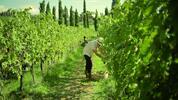 Spoznajte tie najlepšie vína z malých talianských vinárstiev