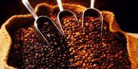 Výber najlepších zrnkových plantážných káv