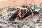 Štartovné Rugged Race Extreme - prekážkový beh s 15+ prekážkami (7 km)