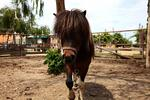 Lekcia jazdenia pre milovníkov koní alebo vozenie sa a starostlivosť o poníky…