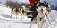 Jazda na psom záprahu - 12 Sibírskych husky a krásne zasnežené Donovaly